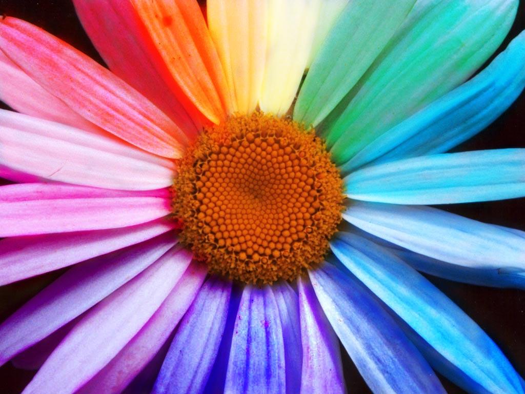 rainbow-flower-1394714